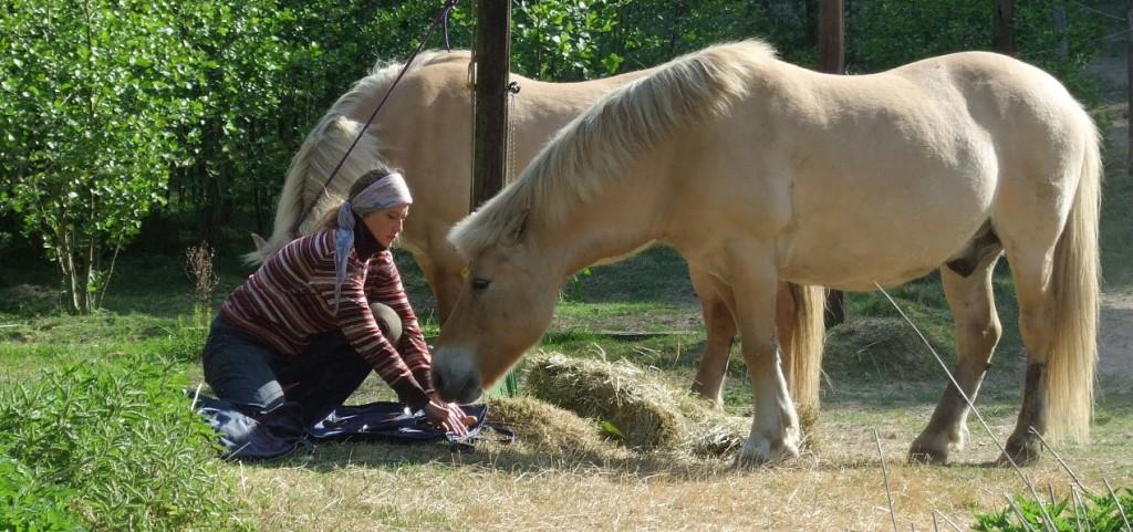 Diese Pferde durften 20 Jahre lang all die Kräutermischungen testen, die Christa entwickelt hatte.