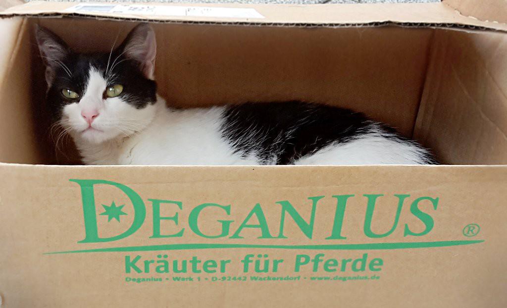 KatzeRuby im Deganius Karton