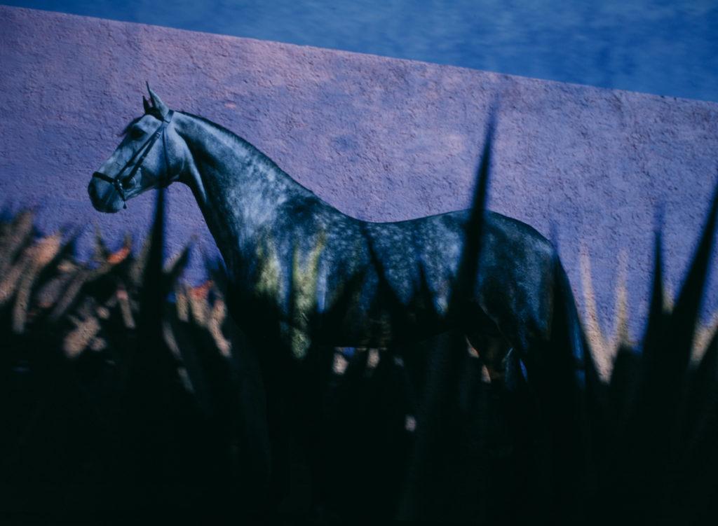 Abendstimmung mit Pferd in Mexico