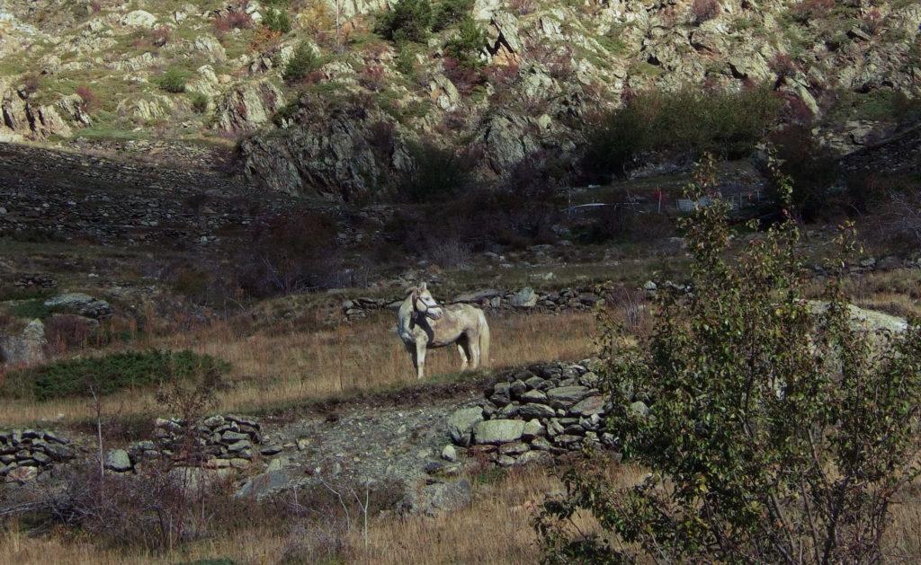 Pferd in der Provence